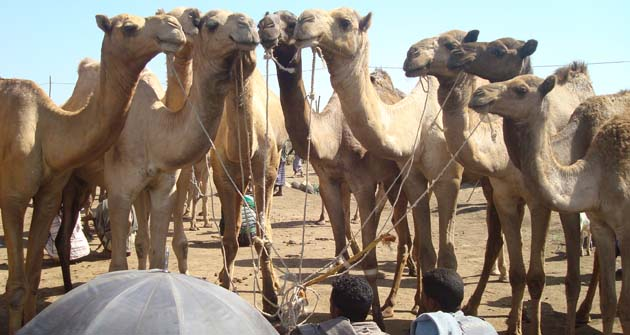 camel-route-2-048